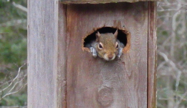 cute squirrel photo2