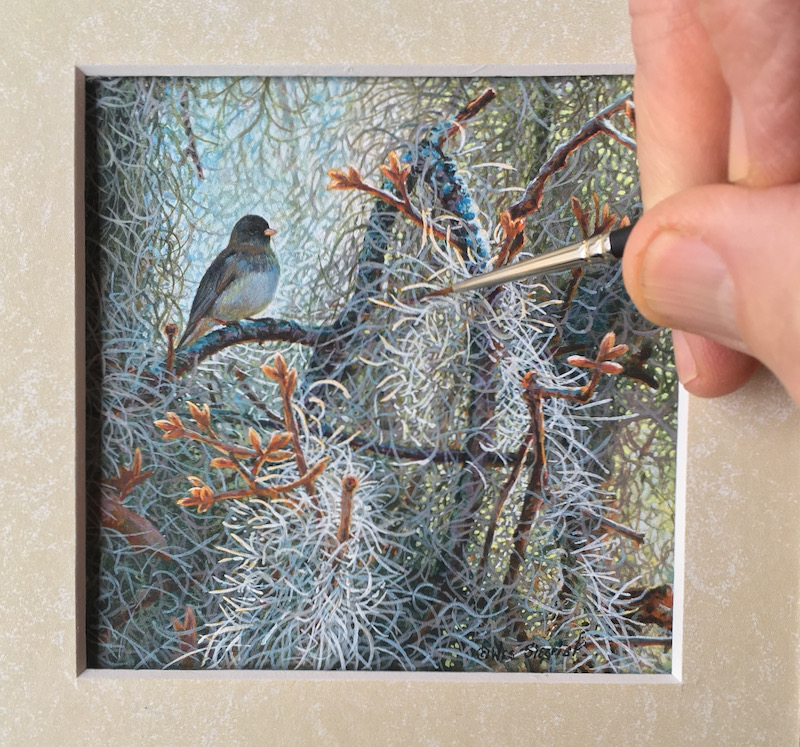 junco bird painting by wes siegrist