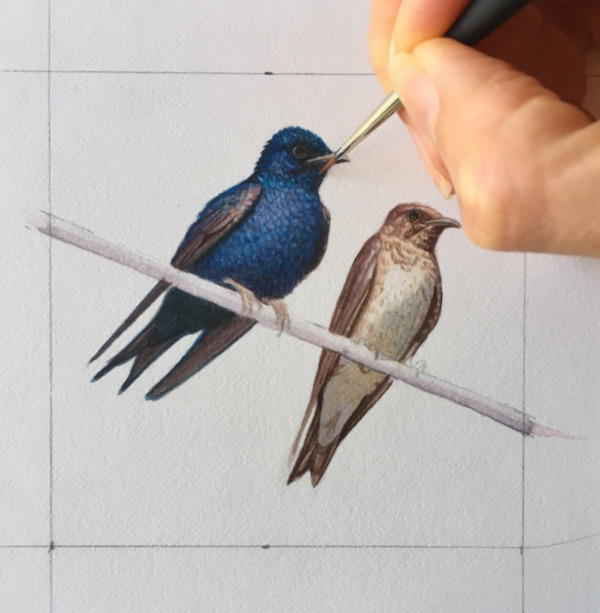 commission a bird painting