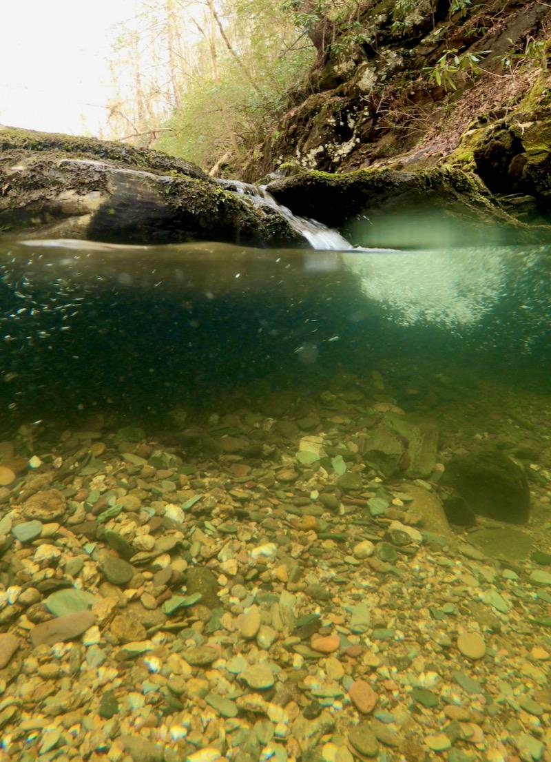underwater photo by rachelle siegrist