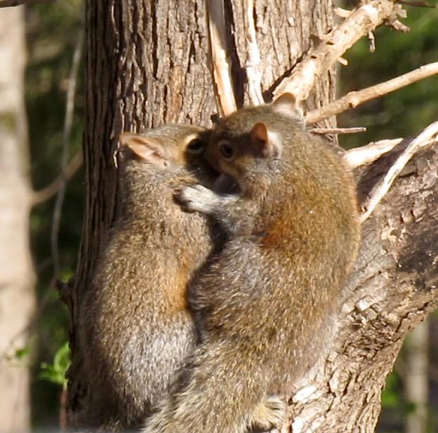 baby squirrel photo10