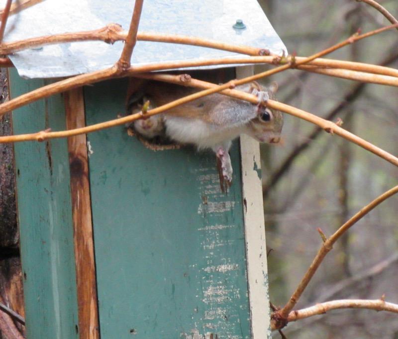 baby squirrel photo2