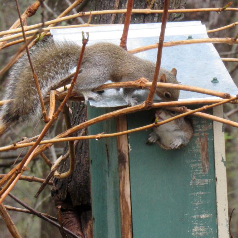 baby squirrel photo5
