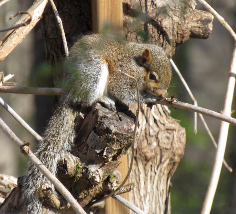 baby squirrel photo6