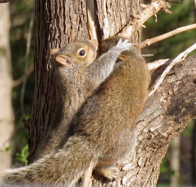 baby squirrel photo9