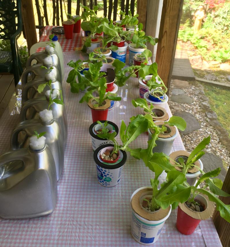 hydrophonic garden