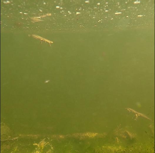 newts photo