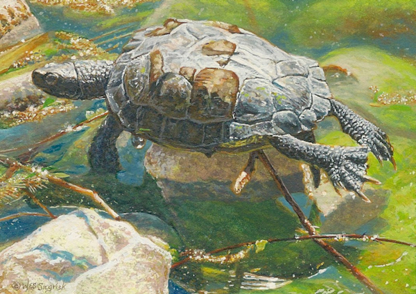 turtle painting by Wes Siegrist