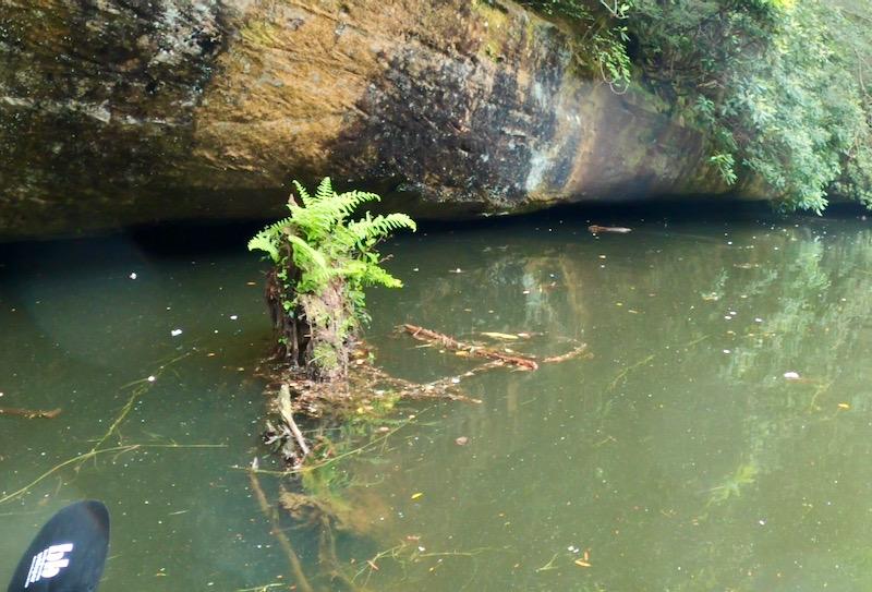 beaver photo by rachelle siegrist