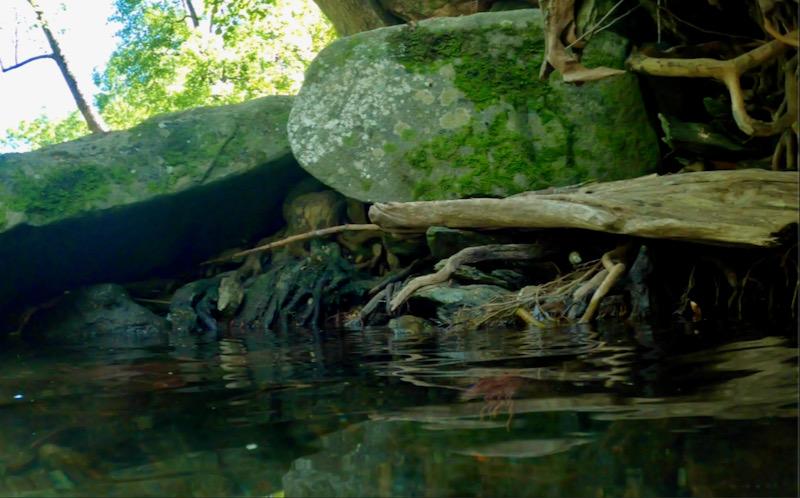 underwater photo by Rachelle Siegrist.2