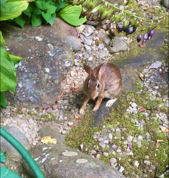 bunny photo by rachelle siegrist