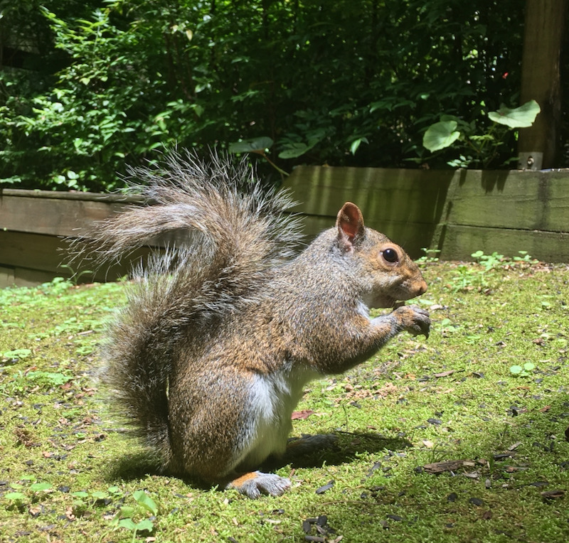 cute squirrel photo by rachelle siegrist
