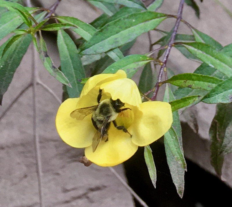 bumble bee photot
